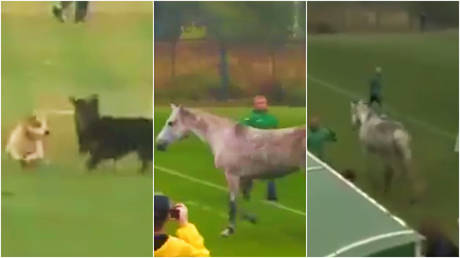 Two dogs and a horse have invaded a football match in Ukraine © Twitter / PVP.Poltava via Buckarobanza