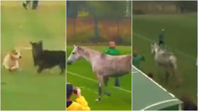 Deaf Olympics football match in Ukraine stopped as dogs invade the pitch – then a horse heads for a dugout minutes later (VIDEO)