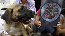 As South Korea considers banning dog meat, who are the meat-munchers of the West to tell others what animal is OK to eat?