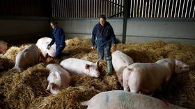 UK invites 800 more foreign butchers to deal with pig slaughter backlog & avert mass culling