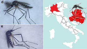'Alien' mosquitos from East Asia taking over Italy could be vector for viruses – study