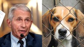 Sick puppies: Fauci under fire from lawmakers after reports of US taxpayer money spent on cruel drug experiments on dogs
