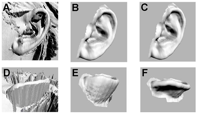 Digitization process for human ears. (Image from plosone.org) )