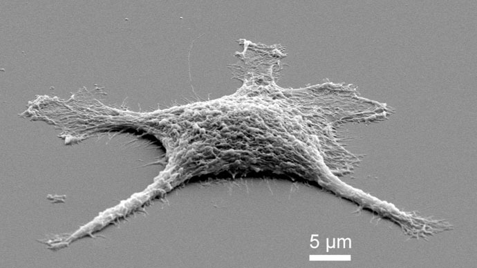 'Zombie cell' mates biology and chemistry at nano-scale
