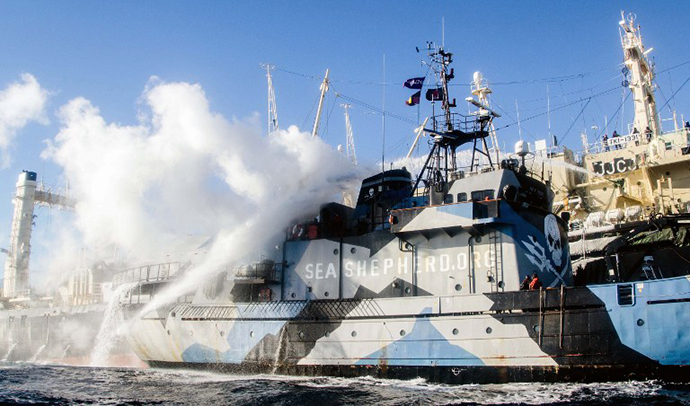 The Sea Shepherd ship Steve Irwin smoke stacks billowing steam after Japanese whalers and militant conservationists clashed dangerously in icy waters off Antarctica. (AFP Photo)