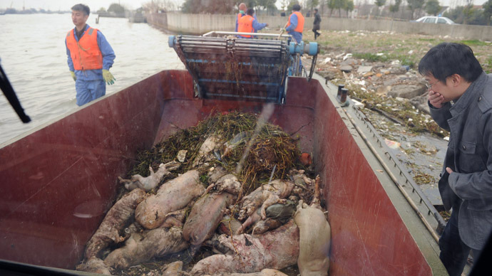 Porcine pollution: Thousands of dead pigs dumped in Chinese river (PHOTOS)