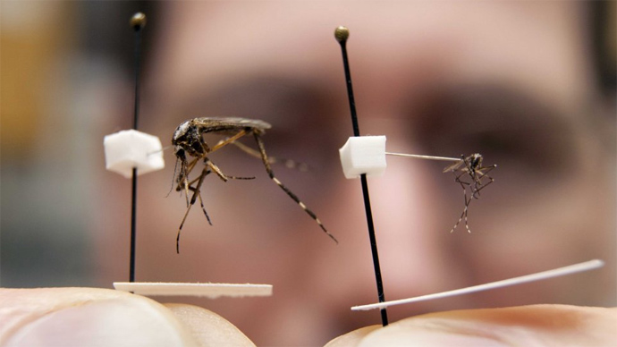 Genetically modified mosquitos could be used to fight malaria