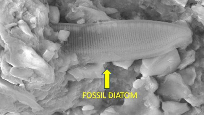 The supposedly fossilised structure found in a meteor. Picture: University of Cardiff.