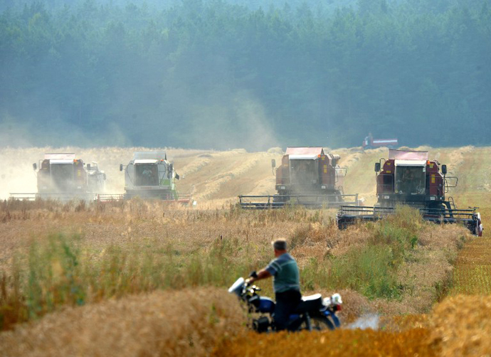A Belarusian man watches as combine harvesters work in a wheat field in Yurievo, some 75 km north from Minsk. (AFP Photo / Viktor Drachev)