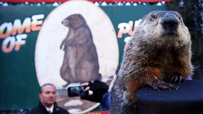 Punxsutawney Phil might face execution for wrong weather forecast