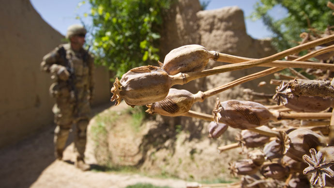 U.S. army soldier of the Battle company, 1-508 Parachute Infantry battalion, 4th Brigade Combat Team, 82nd Airborne Division, walks past cropped opium poppies during a patrol in Zahri district of Kandahar province, southern Afghanistan.(Reuters / Shamil Zhumatov)
