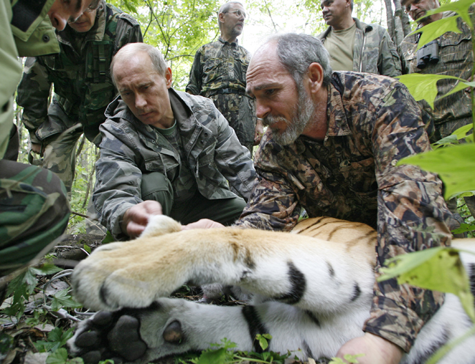 Vladimir Putin, left, and Senior Researcher of the Ecology and Evolution Problems Institute of the Russian Academy of Sciences Viktor Lukaretsky, right, looking over a five year-old tigress, temporarily immobilized by scientists, during a visit to the Ussuri Reserve in the Far East (RIA Novosti / Alexsey Druginyn)