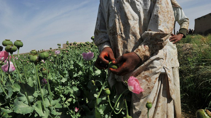 Afghanistan expecting record opium crop