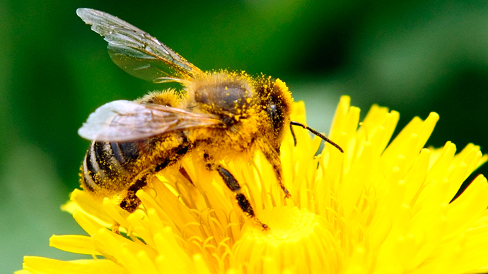 US honeybee population suffers 'unsustainable' death rate over the winter