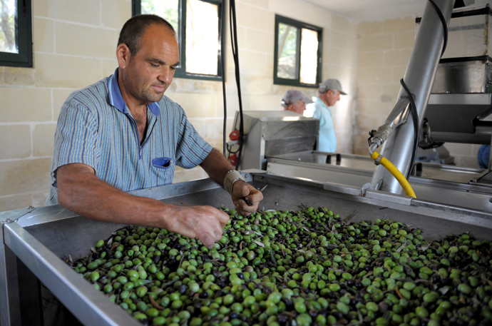 A worker checks olives before they are pressed to make olive oil (AFP Photo)