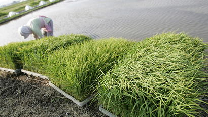 Fukushima rice tests 'radiation free' first time since disaster
