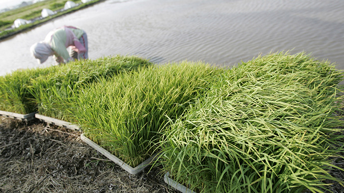 Rice seeds sown in former Fukushima evacuation zone