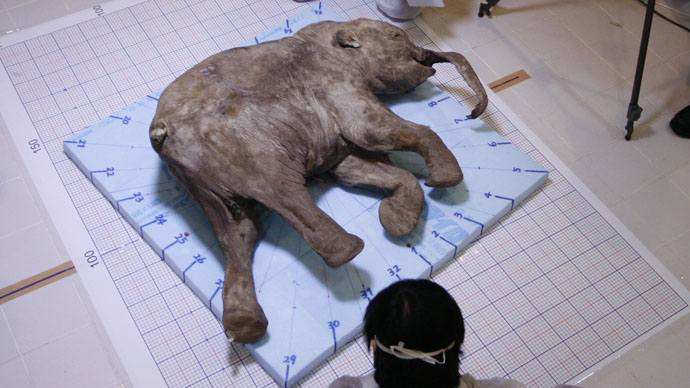 The carcass of the baby mammoth, named Lyuba, found in 2007 / RIA Novosti