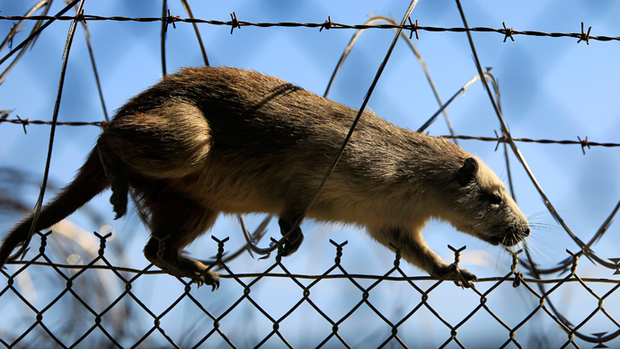 Mississippi sued over for-profit prison where inmates sell leashed rats