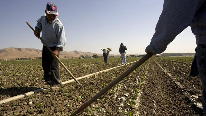 Workers tend to a field at a Earthbound Organic Farm in San Juan Bautista, California. (AFP Photo / David Paul Morris)