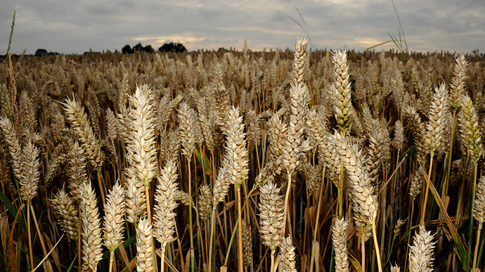 Monsanto hit with class action lawsuits in mystery GMO wheat case