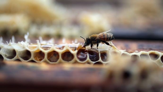 Thousands of bees die at start of National Pollinator Week