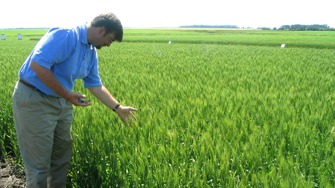 Monsanto points to sabotage at GMO-contaminated wheat field