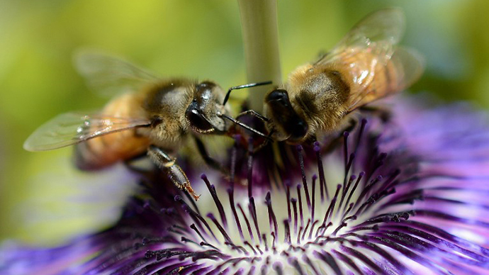 50,000 dead Oregon bees to be honored in memorial service