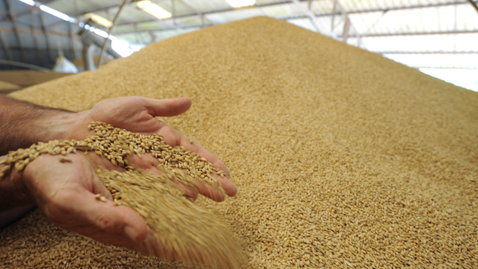 Monsanto unapproved GMO wheat govt-stored up to 2011