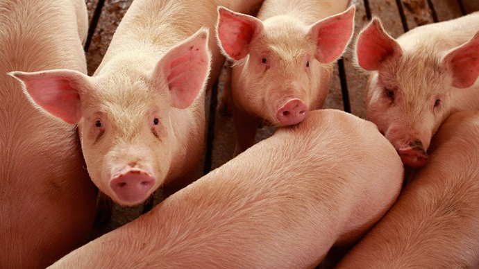 Pork beats oil and gold as hottest US commodity