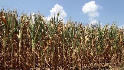 Monsanto's SmartStax maize 'to be approved for growth in October' in EU