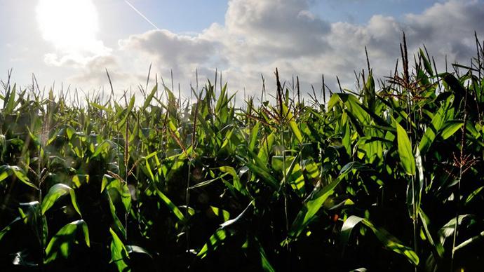 No more GMO: Monsanto drops bid to approve new crops in Europe