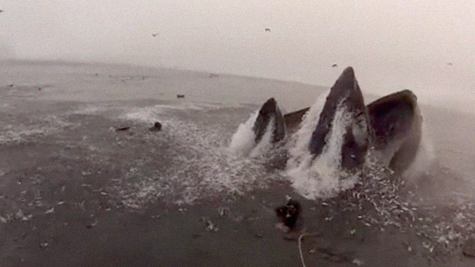 Divers nearly swallowed by whales off California coast (VIDEO)