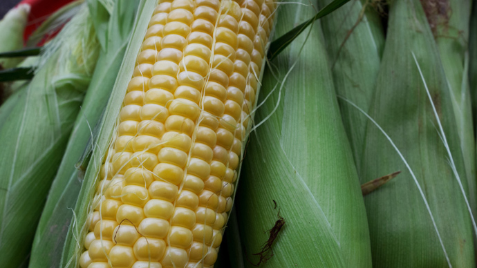 StarLink resurfaces: GM corn banned decade ago found in Saudi Arabia