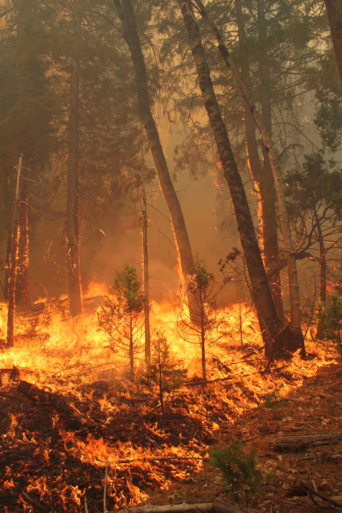Ground fuel and ladder fuel burn at the Rim Fire in this undated United States Forest Service handout photo near Yosemite National Park, California, released to Reuters August 27, 2013. (Reuters/Mike McMillan/U.S. Forest Service/Handout via Reuters)