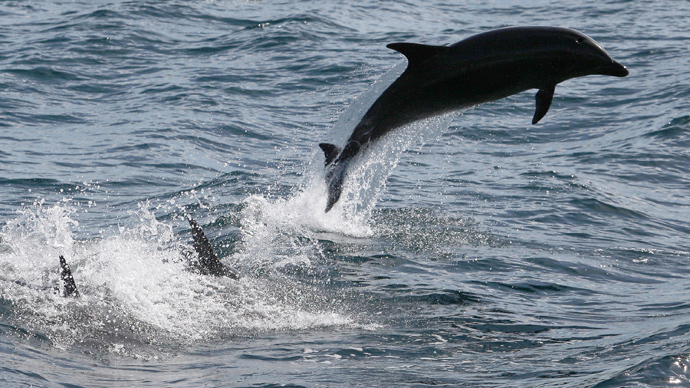 Open-sea US Navy testing will kill hundreds of dolphins and whales