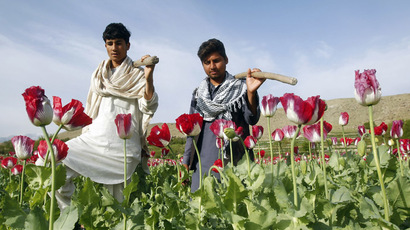 Poppy fields forever? Record opium output boosts Afghan warlords' power base