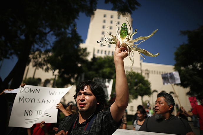 "A man holds a painted ear of corn during one of many worldwide ""March Against Monsanto"" protests against Genetically Modified Organisms (GMOs) and agro-chemicals, in Los Angeles, California October 12, 2013. (Reuters / Lucy Nicholson)"