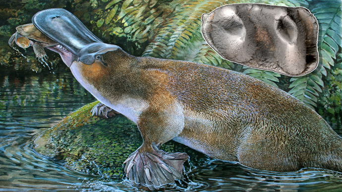'Godzilla platypus' used to roam Australia waters, new fossil reveals