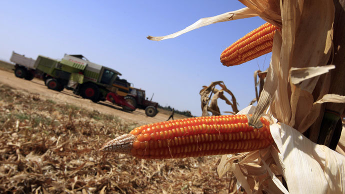 GMOs linked to gluten disorders plaguing 18 million Americans - report