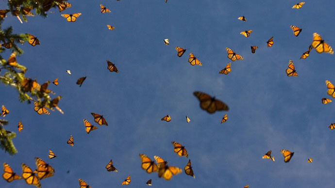 New ban in nanny city San Francisco? Releasing butterflies could soon be illegal