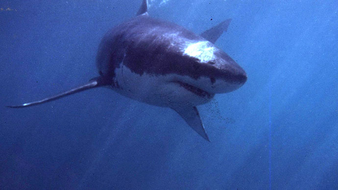 Twitter feed warns Australian swimmers when sharks are nearby