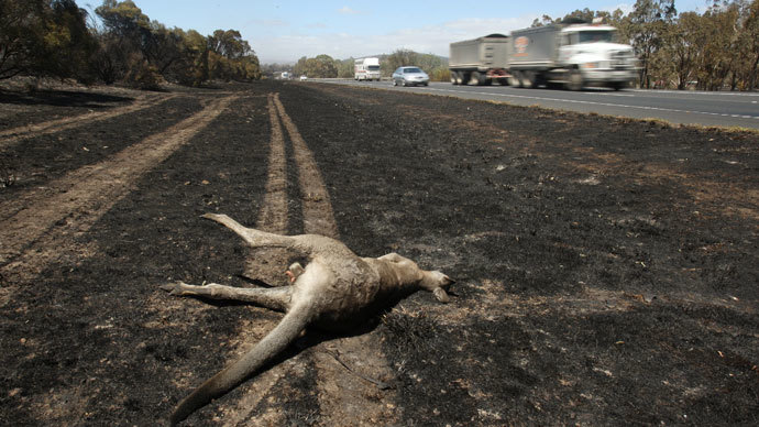 No 'polar vortex' here: Record heat grips Australia killing thousands of animals