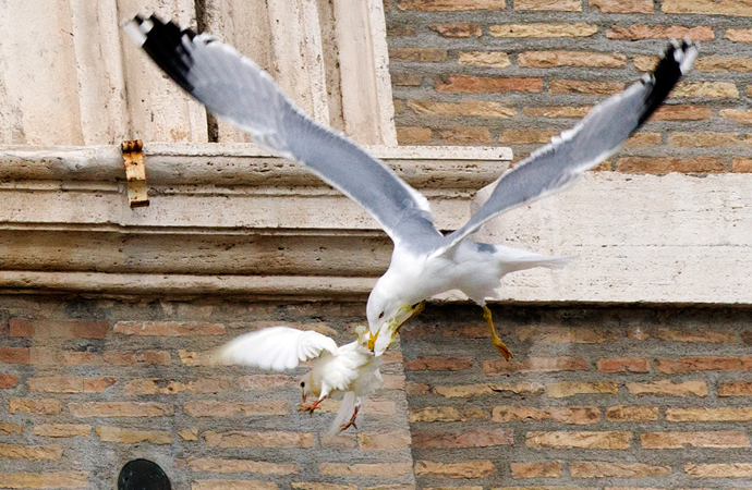 A dove released during an Angelus prayer conducted by Pope Francis, is attacked by a seagull in Saint Peter's square at the Vatican January 26, 2014 (Reuters / Alessandro Bianchi)