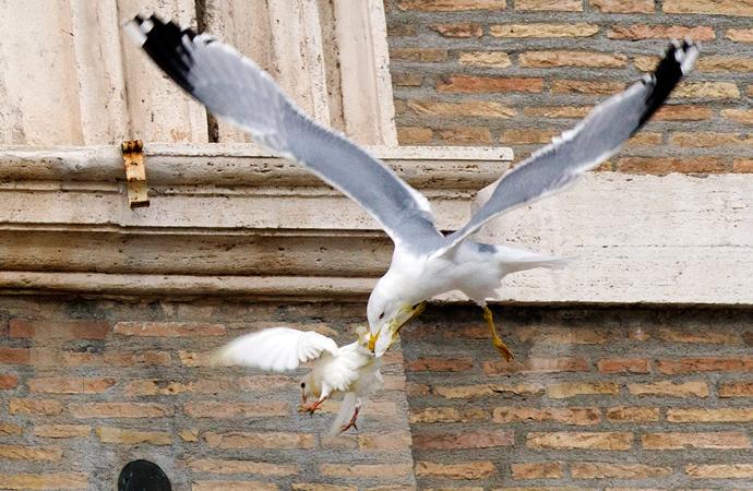 На голубей, выпущенных папой римским после молитвы за украину, напал ворон