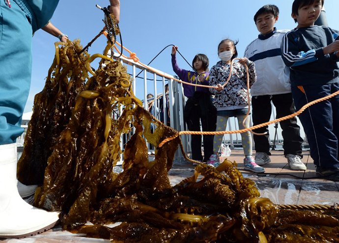 "Students from the Kanazawa elementary school harvest ""Wakame"" or edible seaweeds during a press preview of Yokohama Hakkeijima SeaParadise's new attraction facilities, ""Umi Farm,"" or Sea Farm in Yokohama on February 28, 2013. (AFP Photo / Toshifumi Kitamura)"