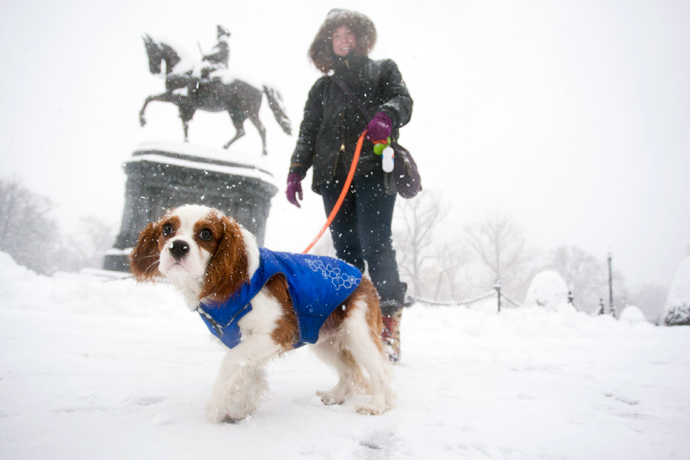 A King Charles Spaniel sports a winter coat while walking in the Public Garden during a winter storm in Boston, Massachusetts, February 5, 2014. (Reuters / Dominick Reuter)