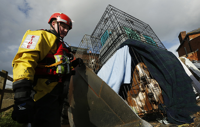 Sixteen basset hound dogs and a similar number of cats are rescued by the Devon and Somerset Fire and Rescue Service during continued flooding at Burrowbridge in southwest England February 9, 2014. (Reuters / Luke MacGregor)