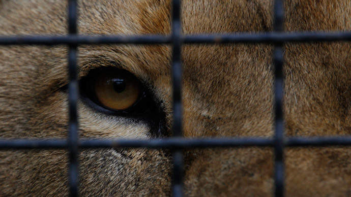 Thousands of zoo animals killed in Europe every year