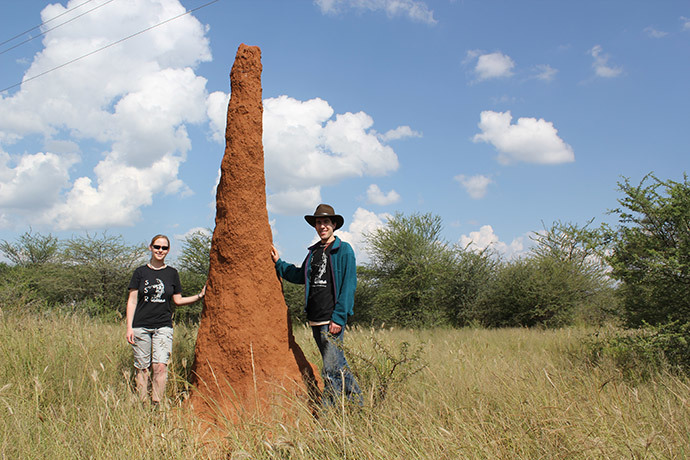 A colony of termites (image from http://cdn.physorg.com)